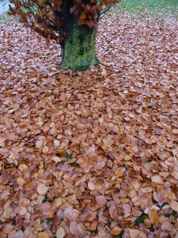 automne007.jpg