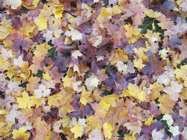 automne012.jpg