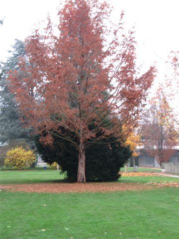 automne001.jpg