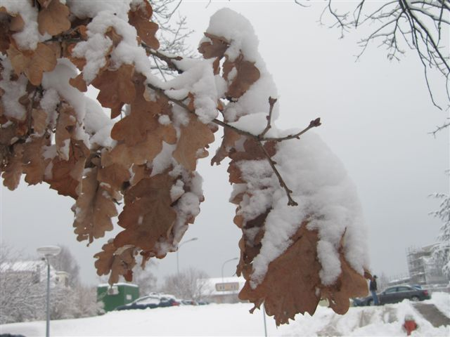 neige004.jpg