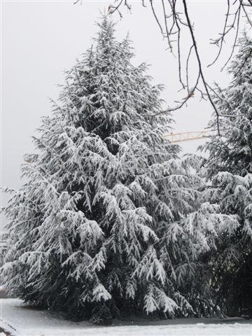 neige005.jpg