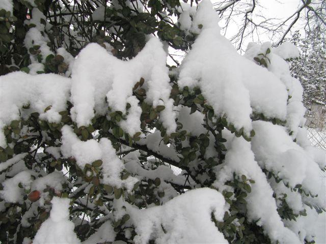 neige015.jpg