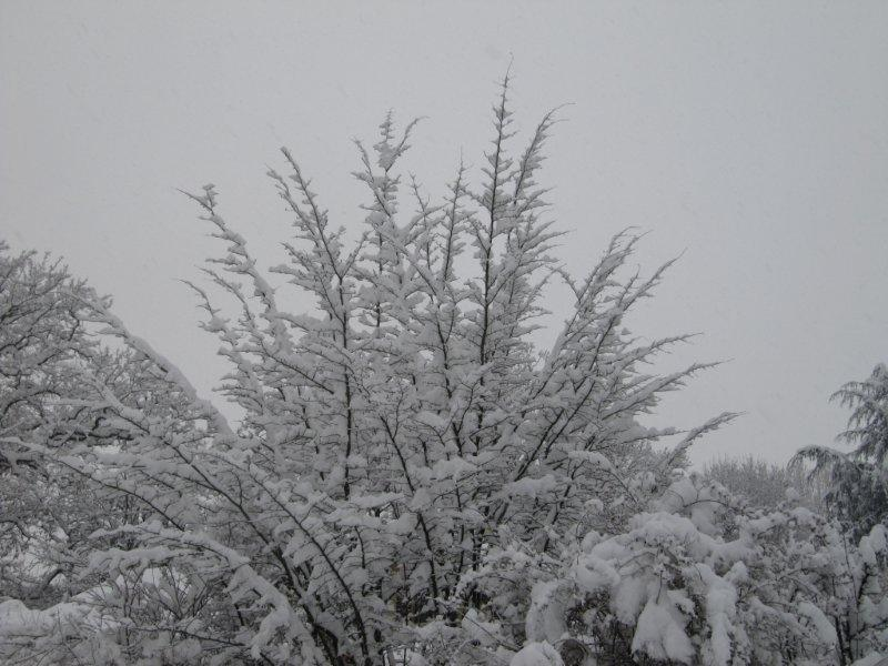 neige030.jpg
