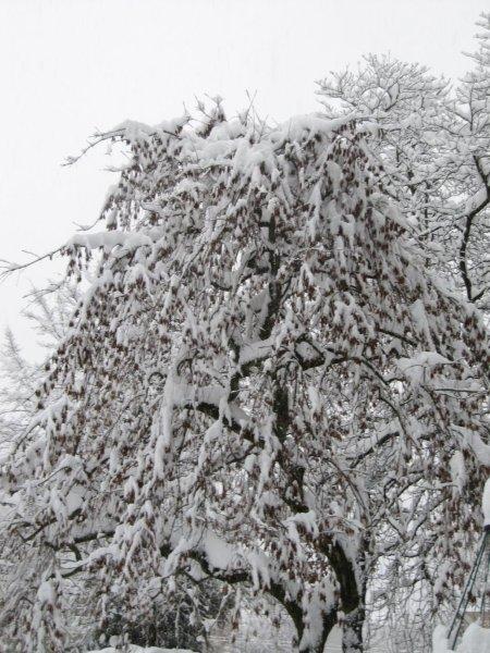 neige039.jpg
