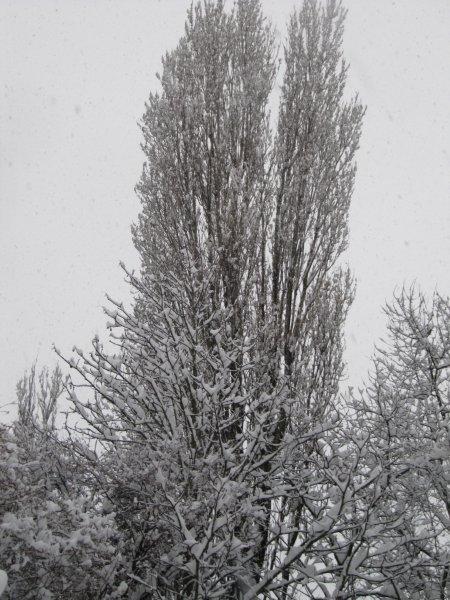 neige048.jpg