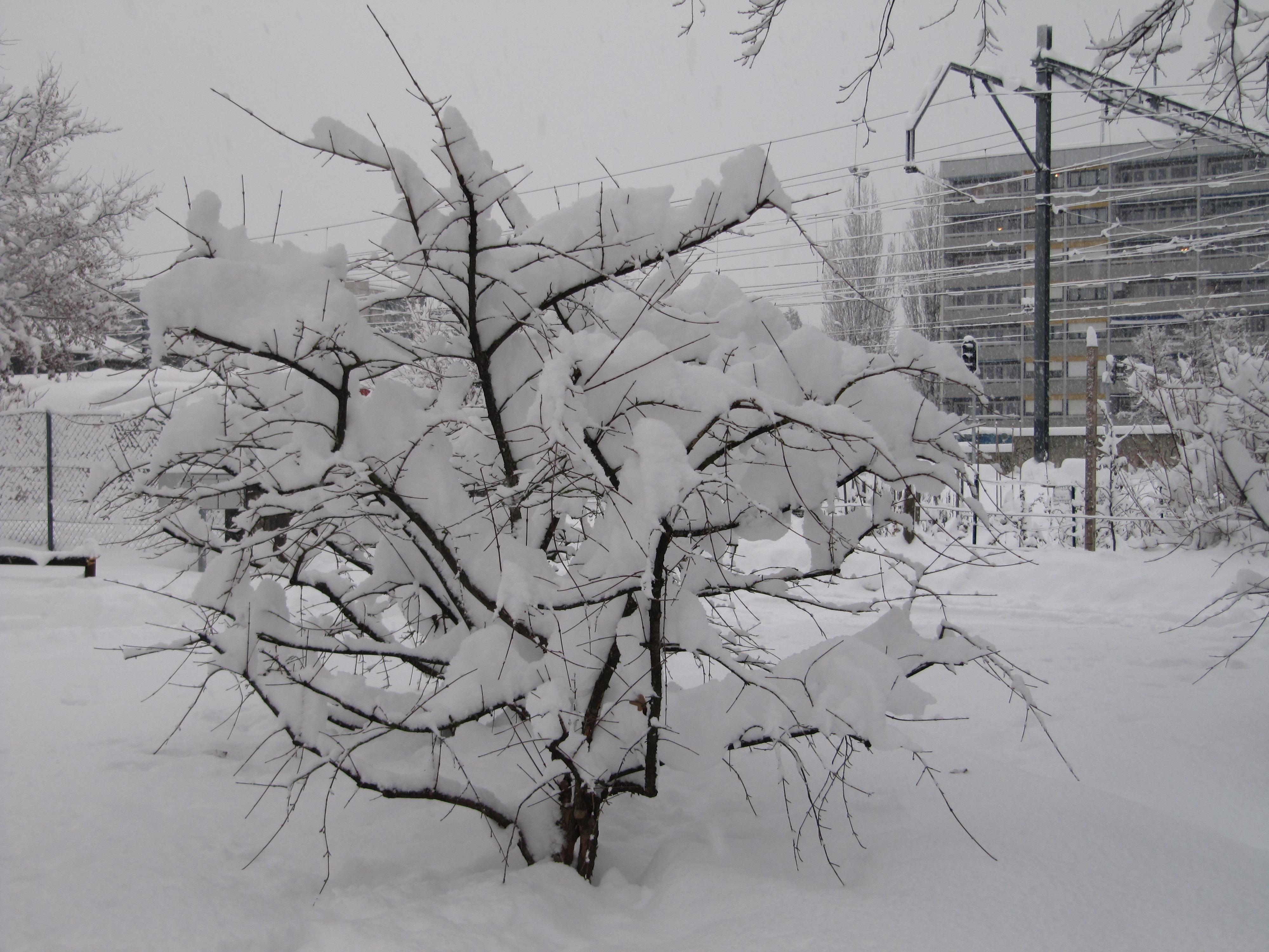 neige054.jpg