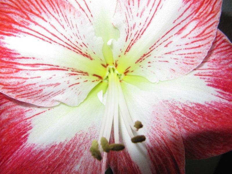 fleurs005.jpg