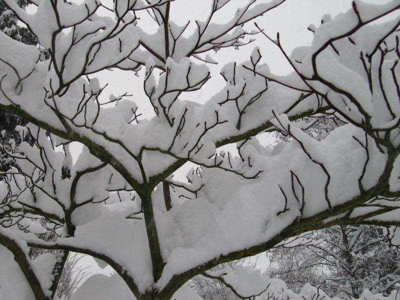 neige051.jpg